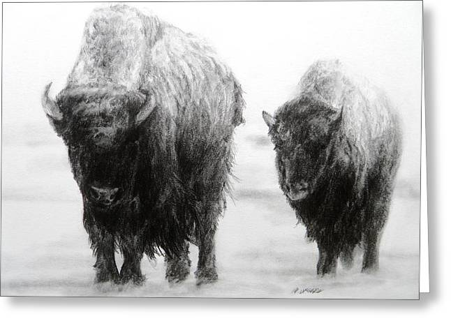 Bison Drawings Greeting Cards - Crossing Yellowstone Greeting Card by Meagan  Visser