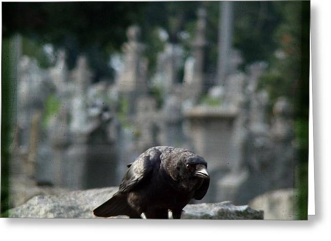 Crow In The City Of Stone Greeting Card by Gothicrow Images