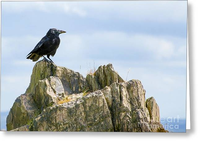 Full-length Portrait Greeting Cards - Crow On The Rocks Greeting Card by Linsey Williams