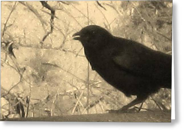 Crow Greeting Card by Tracy Fallstrom
