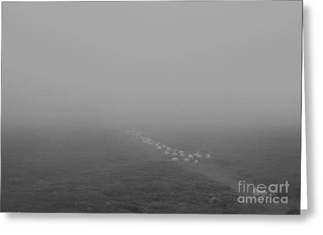 Grey Clouds Greeting Cards - Descending to sheep in the clouds Greeting Card by Paul Davenport