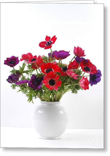 Anemone Coronaria Greeting Cards - crown Anemone in a white vase Greeting Card by Ilan Amihai