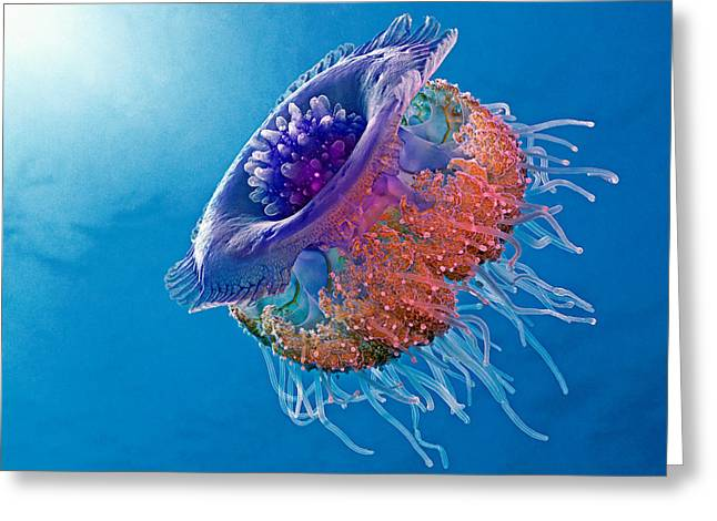 Crown Jellyfish Greeting Card by Henry Jager