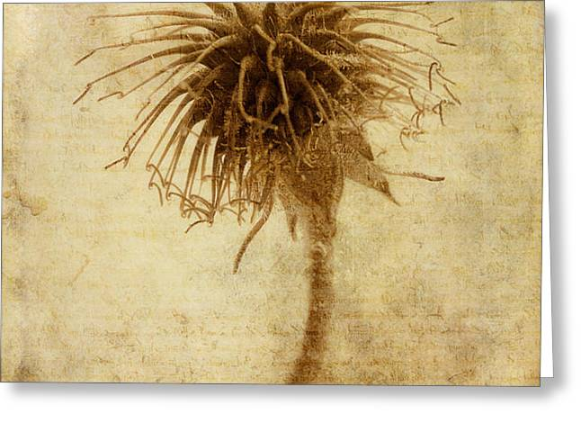 Crown of Thorns Greeting Card by John Edwards