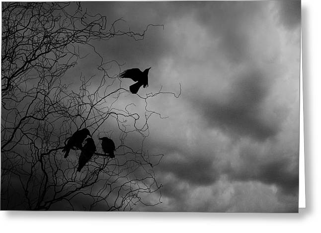 Crows Greeting Card by Cambion Art