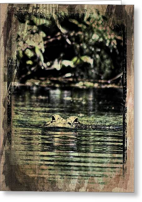 Florida Gators Digital Greeting Cards - Cruisin the Silver River Greeting Card by Sheri McLeroy