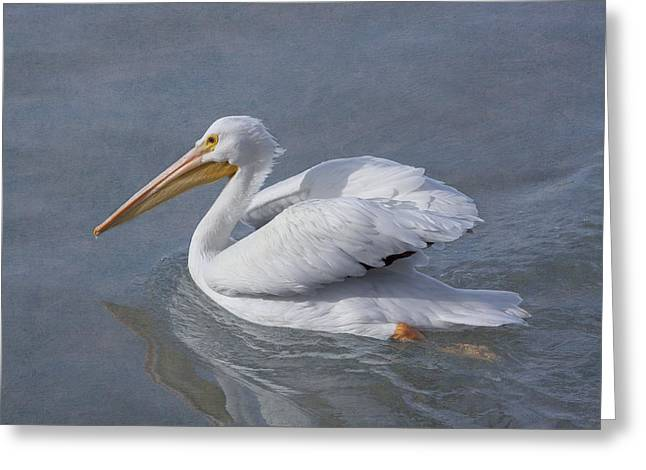 Seabirds Greeting Cards - Cruising Along Greeting Card by Kim Hojnacki