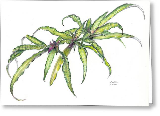 Bromeliad Paintings Greeting Cards - Cryptanthus Fred Ross Greeting Card by Penrith Goff
