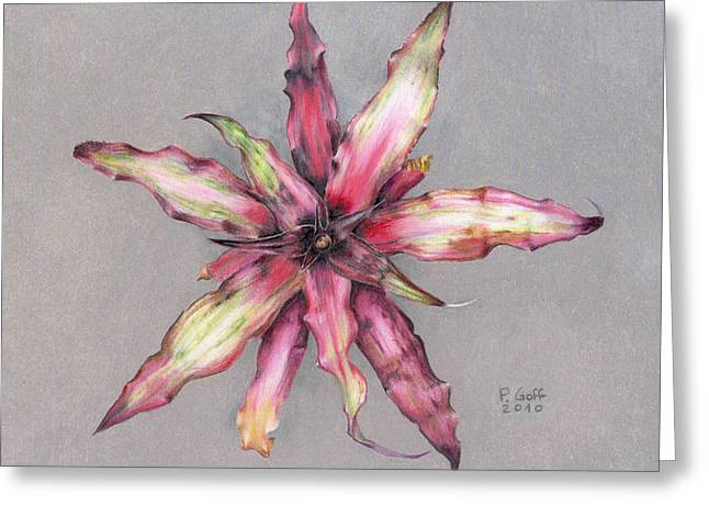 Bromeliad Greeting Cards - Cryptanthus Strawberry Shortcake Greeting Card by Penrith Goff