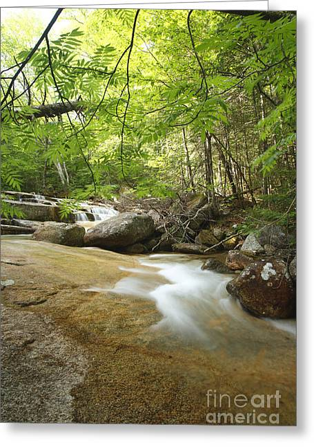 White River Scene Greeting Cards - Crystal Brook - Lincoln New Hampshire USA Greeting Card by Erin Paul Donovan