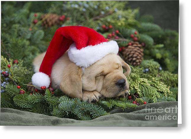 Friendly Puppy Greeting Cards - Cuddly Holiday Puppy Greeting Card by Ron Dahlquist - Printscapes