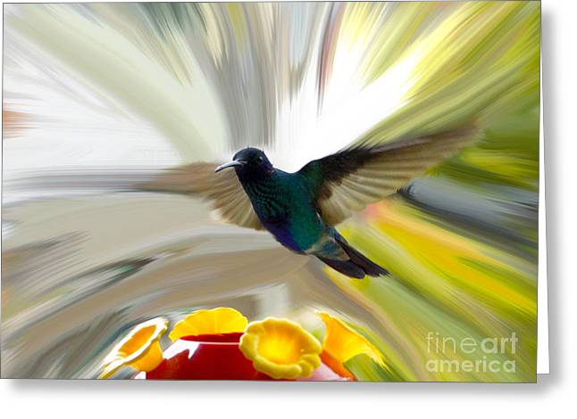 Canadian Photographers Greeting Cards - Cuenca Hummingbird Series 1 Greeting Card by Al Bourassa