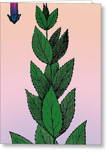 Life Line Mixed Media Greeting Cards - Culvers Root Greeting Card by Eric Edelman