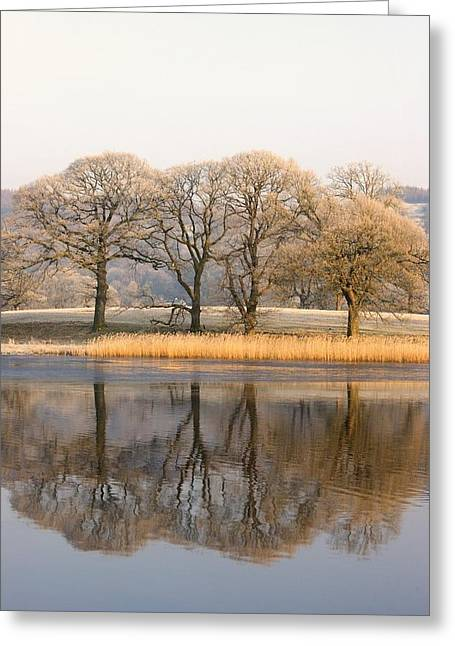 Best Sellers -  - Trees Reflecting In Water Greeting Cards - Cumbria, England Lake Scenic With Greeting Card by John Short