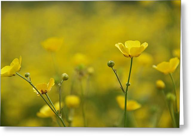 Ground Level Photographs Greeting Cards - Cups Of Sunshine Greeting Card by Odd Jeppesen