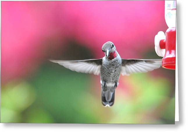Hovering Greeting Cards - Curiosity Greeting Card by Lynn Bauer