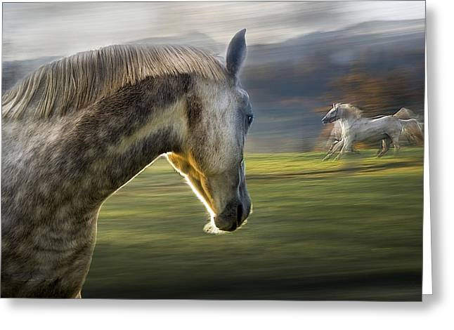 Gallop Greeting Cards - Curiosity Greeting Card by Milan Malovrh