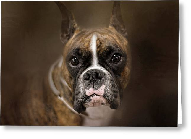 Boxer Art Greeting Cards - Curious Boxer Greeting Card by Jai Johnson