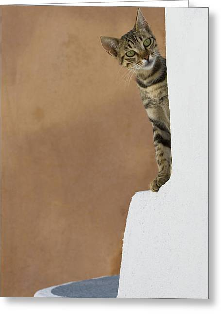 Curious Cat Greeting Card by Jean-Louis Klein & Marie-Luce Hubert