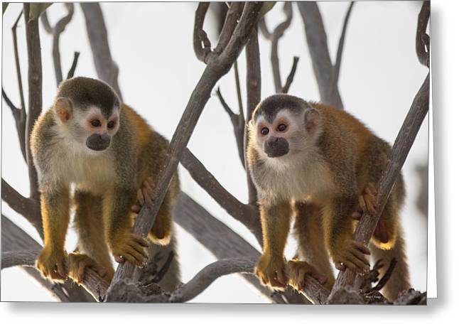 Curious Couple Greeting Card by Betsy C Knapp