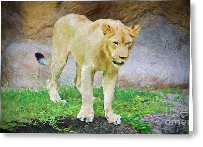 Lioness Greeting Cards - Curious Cub Greeting Card by Judy Kay