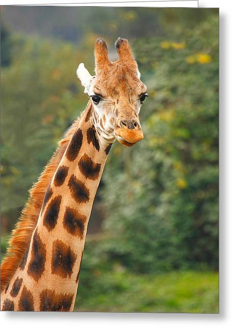 Curious Giraffe Greeting Card by Naman Imagery