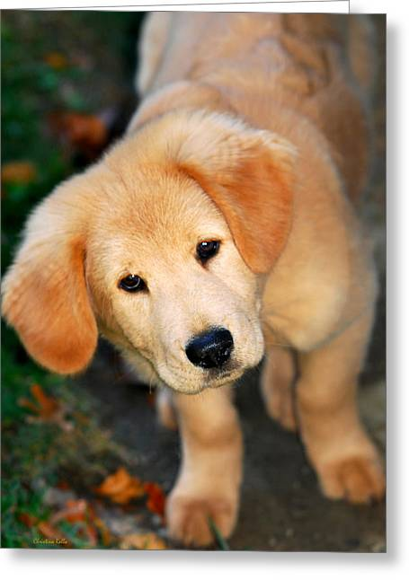 Yellow Dog Greeting Cards - Curious Golden Retriever Pup Greeting Card by Christina Rollo