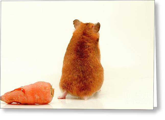 Curious Hamster 1 Greeting Card by Yedidya yos mizrachi