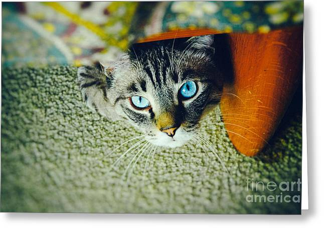 Hiding Greeting Cards - Curious kitty Greeting Card by Silvia Ganora