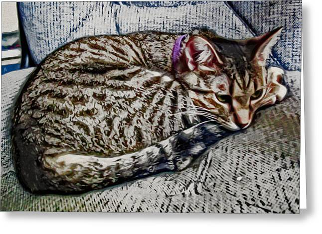 Kitten Prints Greeting Cards - Curled and Ready For A Nap Greeting Card by David G Paul