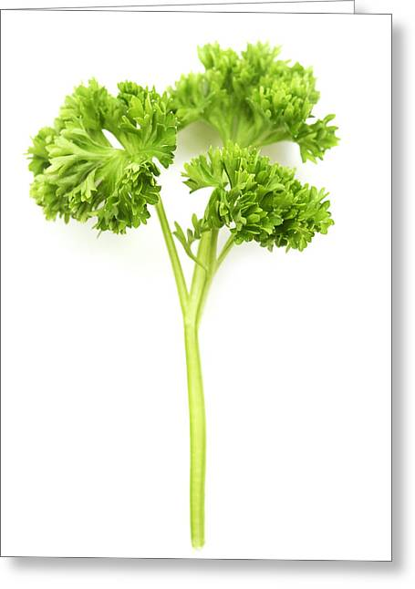 Cut-outs Greeting Cards - Curly leaf Parsley Greeting Card by Fabrizio Troiani