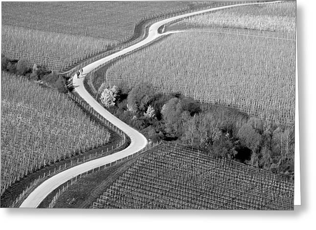 Aerials Greeting Cards - Curved Bw Greeting Card by Matjaz Cater