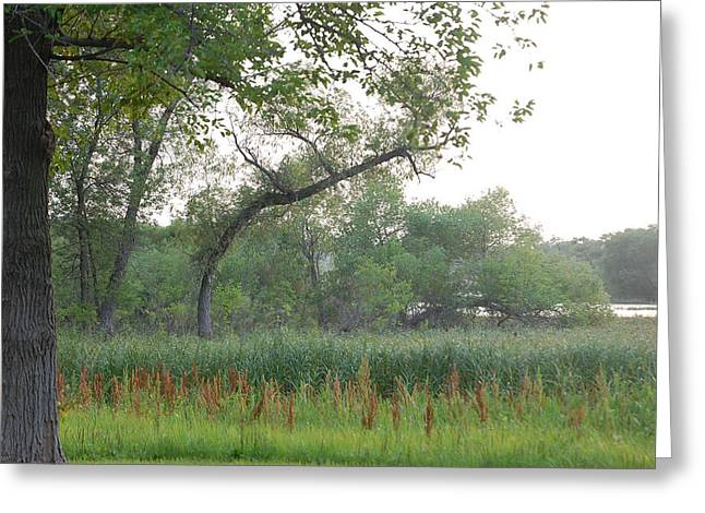 Water Greeting Cards - Curved Trees Greeting Card by Heather Chaput