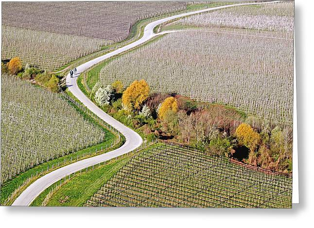 Orchard Greeting Cards - Curves Greeting Card by Matjaz Cater