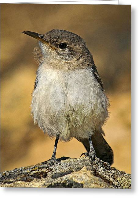 Cute Baby Bird By Jean Noren Greeting Card by Jean Noren