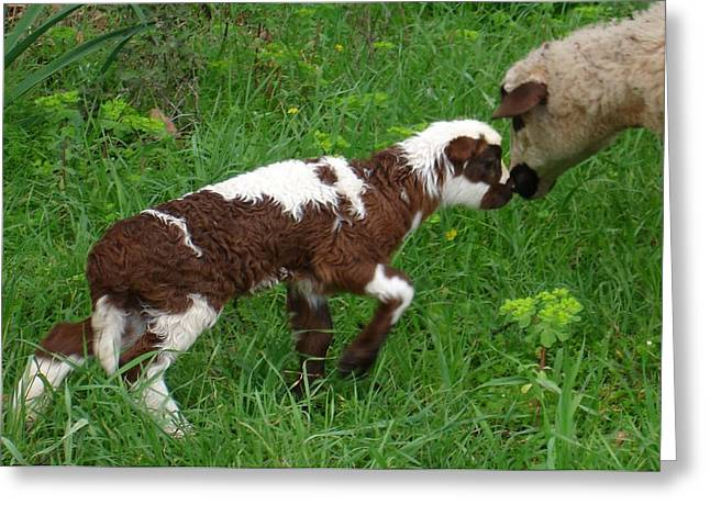 Naivety Greeting Cards - Cute Brown and White Lamb with Ewe Greeting Card by Tracey Harrington-Simpson