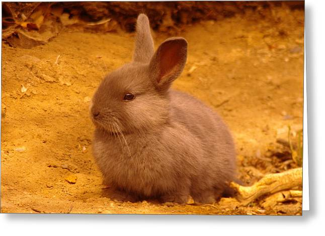 Living Things Greeting Cards - Cute Bunny Greeting Card by Jeff  Swan