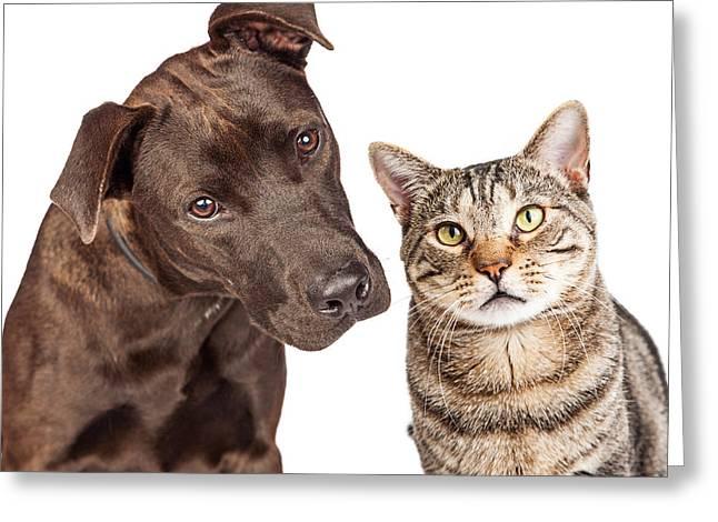 Cute Cat And Dog Closeup Photo Greeting Card by Susan Schmitz