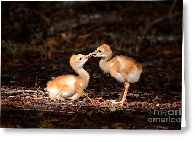 Sandhill Greeting Cards - Cute chicks Greeting Card by Zina Stromberg