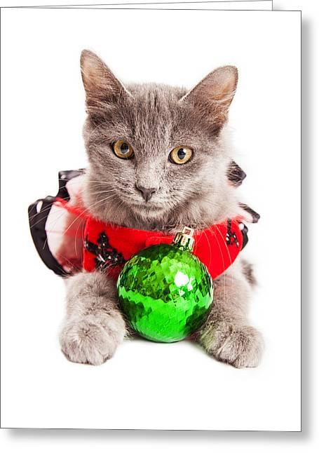 Cute Christmas Kitten Looking Into Camera Greeting Card by Susan Schmitz