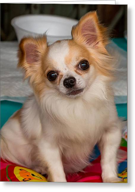 Puppies Photographs Greeting Cards - Cute Dog Greeting Card by John Greene
