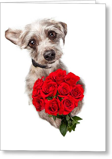 Cute Dog With Dozen Red Roses Greeting Card by Susan Schmitz