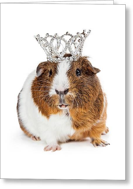 Cute Guinea Pig Wearing Tiara Greeting Card by Susan Schmitz