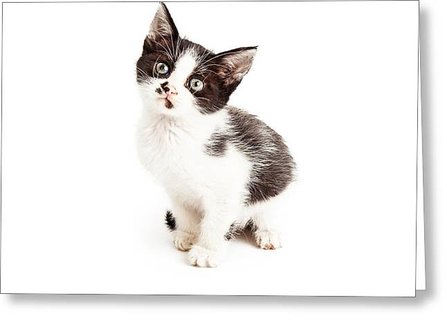 Cute Kitten Greeting Cards - Cute Little Black and White Kitten Sitting Greeting Card by Susan  Schmitz