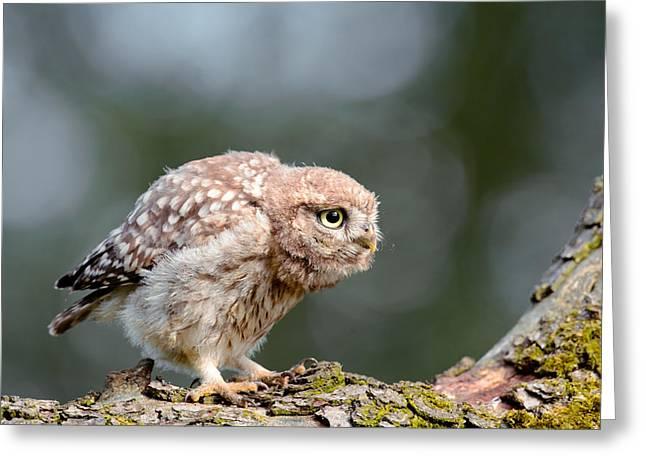 Cute Little Owlet Greeting Card by Roeselien Raimond