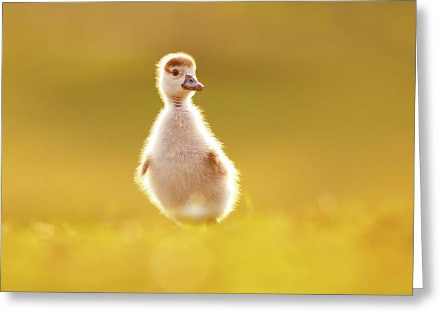 Cute Overload - Baby Gosling Greeting Card by Roeselien Raimond