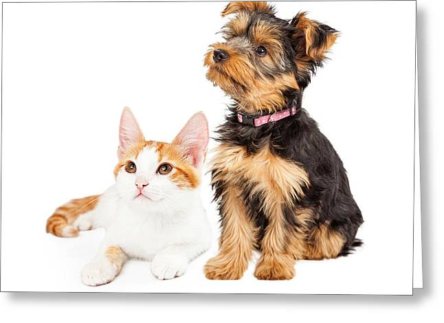 Little Puppy Greeting Cards - Cute Puppy and Kitten Sitting to Side  Greeting Card by Susan  Schmitz