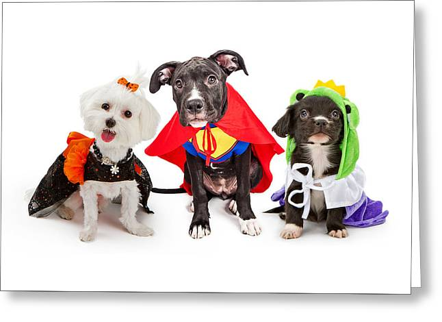 Cute Puppy Dogs Wearing Halloween Costumes Greeting Card by Susan Schmitz