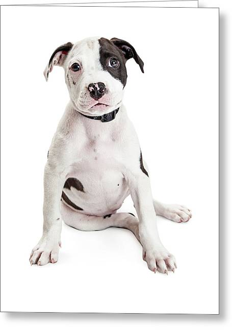 Cute Puppy Sitting To Side On White Greeting Card by Susan Schmitz