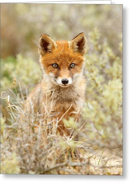 Cute Red Fox Kit Greeting Card by Roeselien Raimond